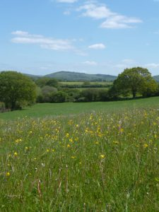 view over meadow to the South Downs