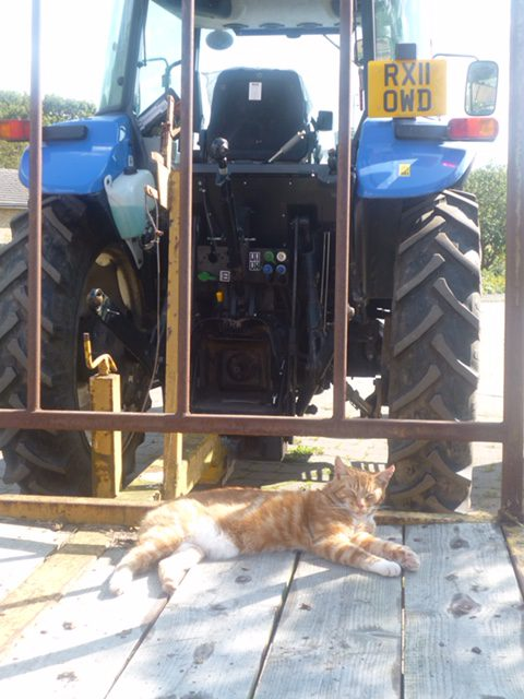 farm cat on the tractor