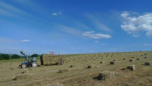 making hay on the farm