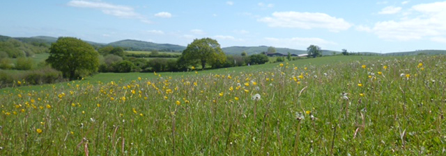 view of meadow and the South Downs
